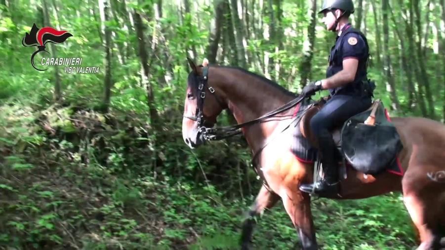 images Carabinieri a cavallo nelle Serre per maggiore sicurezza