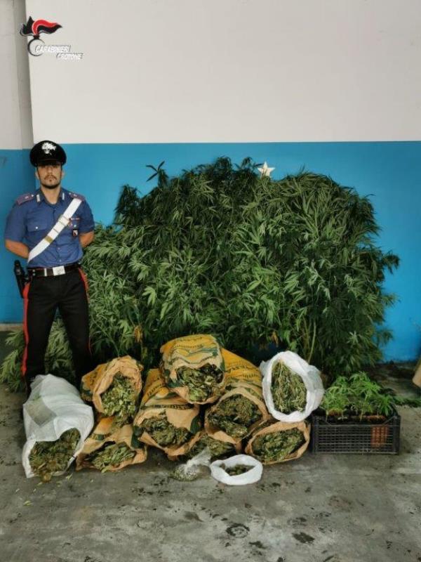 images Isola Capo Rizzuto. 18 chili di marijuana nascosti in un magazzino, 40enne arrestato
