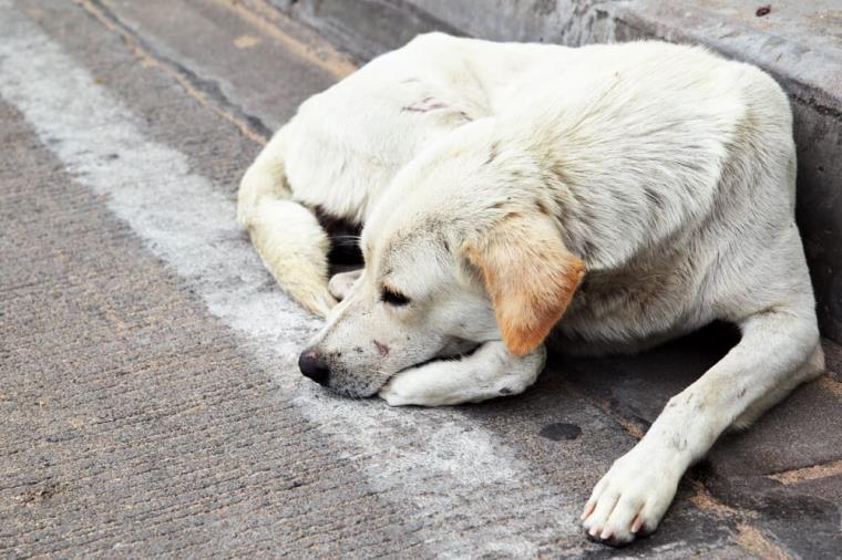 """images Tragedia a Satriano. Stinchi (Bios): """"Comuni e veterinari pubblici da 30 anni  non sterilizzano le centinaia di migliaia di randagi"""""""