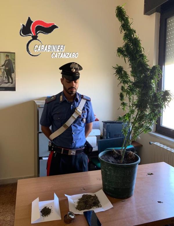 images Droga in casa, arrestato