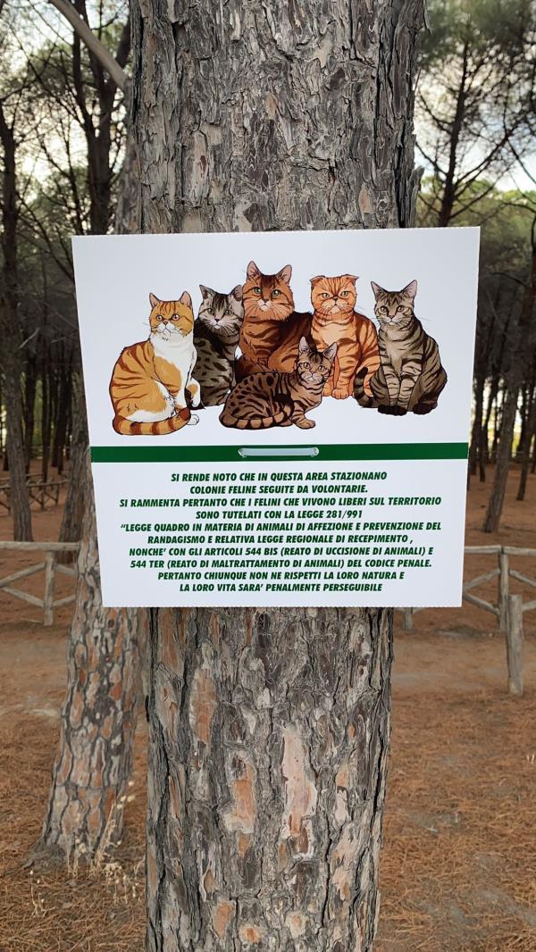 images Le volontarie della Pineta di Giovino difendono le colonie feline e invitano i cittadini a rispettare la legge