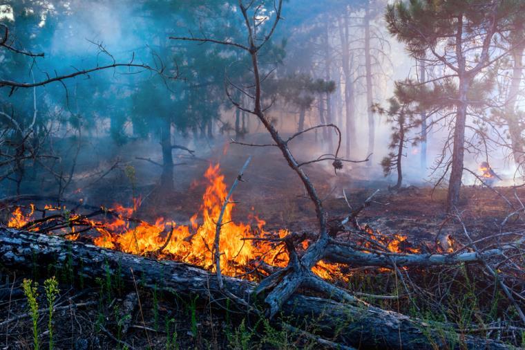 """images Emergenza incendi in Calabria. Saccomanno (Lega): """"Intervenga un esercito di volontari"""""""