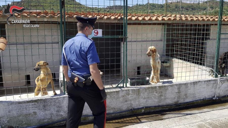 images Spaccio di droga, arrestato un ventiseienne a Isola Capo Rizzuto