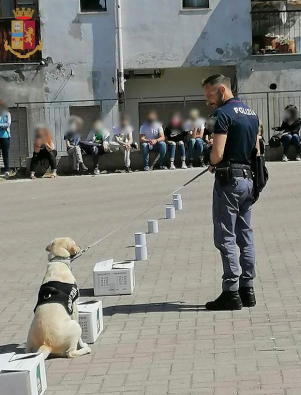 images Vibo Valentia. A lezione di legalità con Malakeh, poliziotto a quattro zampe