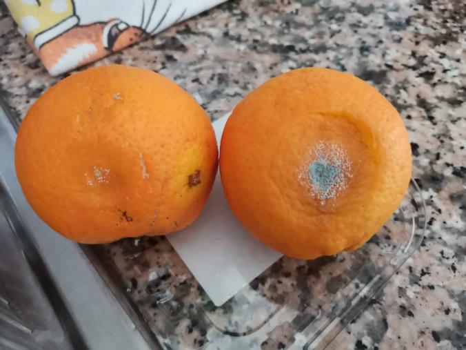 "images Frutta avariata in una scuola del lametino. Adiconsum: ""Necessari controlli preventivi"""