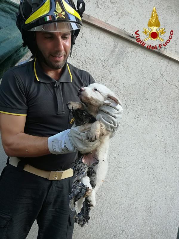 images A Mesoraca i Vigili del Fuoco salvano un cagnolino