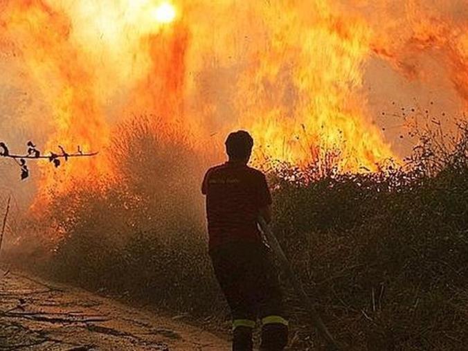 """images Incendi in Calabria. Canino (Pro Loco): """"Con l'inizio dell'anno scolastico sarebbe utile una campagna di sensibilizzazione per un progetto flora"""""""