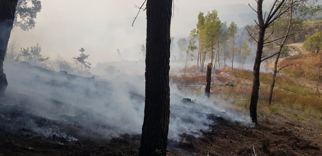 images Incendi in Calabria, Legambiente chiede un'indagine parlamentare per accertare la verità