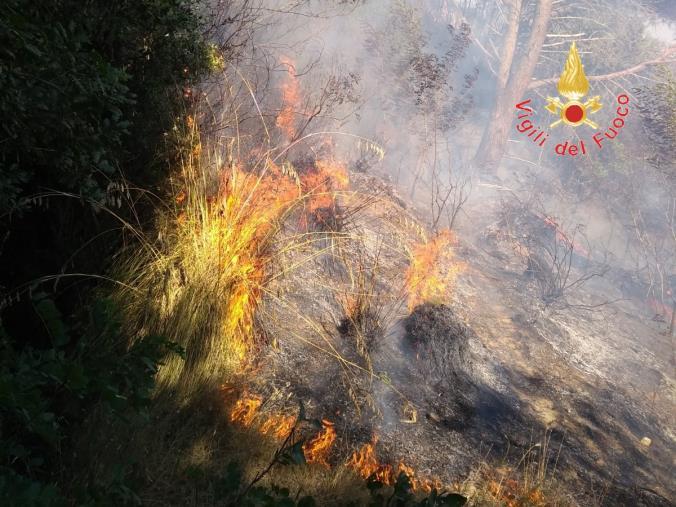"""images Incendi, """"Cambiamo la Calabria"""": """"Prevenzione e strategia per le aree interne"""""""