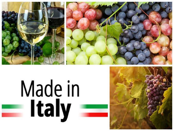 """images Vino dealcolato per volere dell'Europa. Taverniti: """"Cosa c'è di vero? Difendiamo il distintivo di eccellenza 'Made in Italy'"""""""