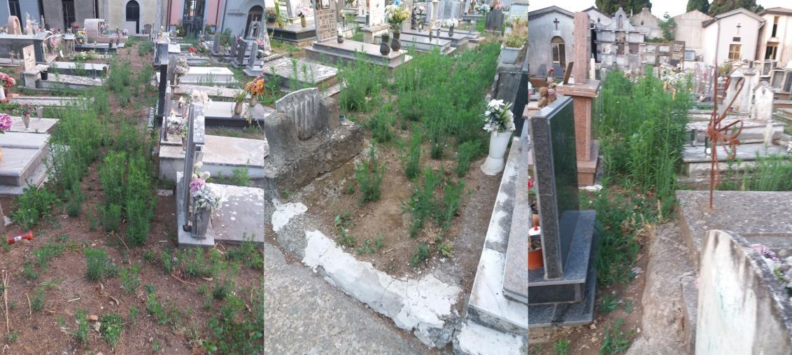 """images Girifalco. Il cimitero comunale """"offeso"""" da erba alta, sporcizia e incuria"""