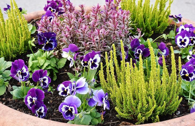 images Coldiretti Calabria: aumentano le richieste di piante e fiori nei vivai dopo l'anno del Covid