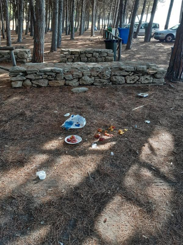 images Rifiuti in pineta a Giovino, nel capoluogo di regione FdI fa scoppiare il caso