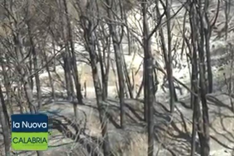 """images Pineta di Siano devastata: il giorno dopo. I residenti di San Cono: """"Siamo ancora sotto shock"""""""