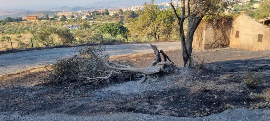 """images Incendi a Catanzaro, Corsi (Gruppo Misto): """"I residenti della frazione Santa Domenica non siano dimenticati"""""""