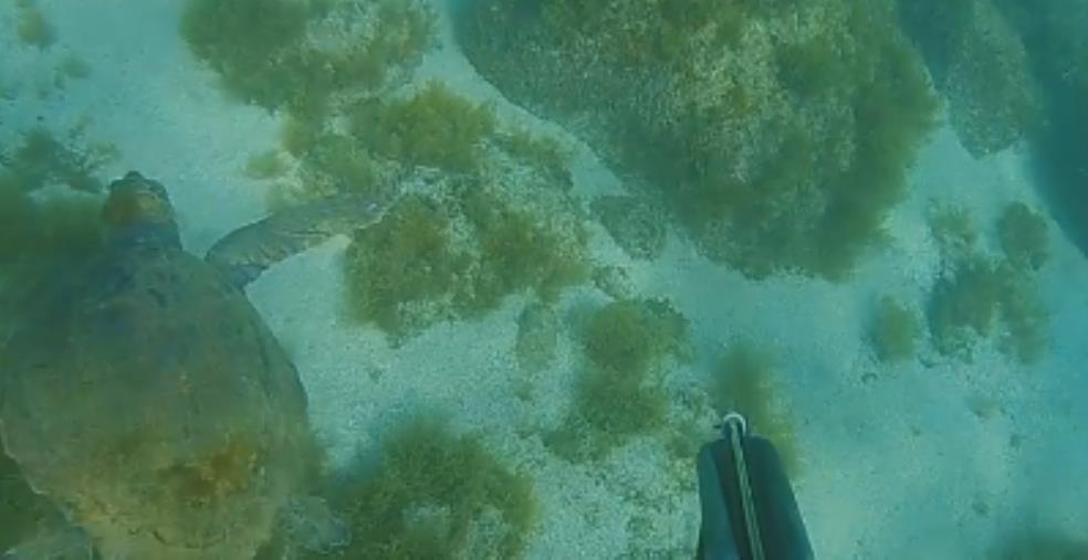 images Tropea.  Rischiava la morte in mare, salvata una tartaruga ferita e senza una zampa